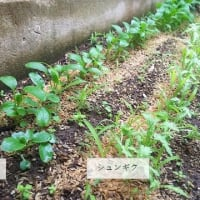 10月22日・1坪菜園の様子!