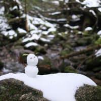 雪に覆われたもののけ姫のモデルの森【屋久島白谷雲水峡ガイドツアー】