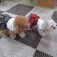 20/03/20 犬の幼稚園BuddyDog