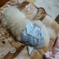 強風ですね~ 老犬ラスさんは爆睡です…(= ̄  ̄=) Zzzz・・・