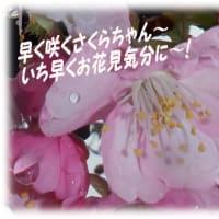 春の食欲・・・吉野家W定食🍚ライス大盛りorおかわり無料~・・&ボランティア後のお楽しみ