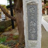 御朱印 鎌倉三十三観音霊場 第15番・向福寺