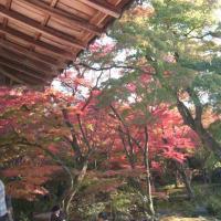 京都へ紅葉見物に行ってきた