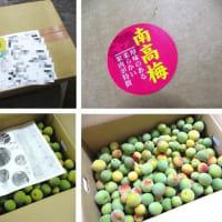 「ふるさと納税」お礼品(2021) ~和歌山県かつらぎ町「南高梅(約5kg・家庭用)」~