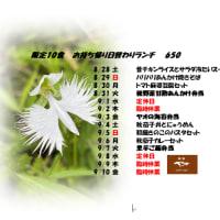 8/28~9/10日替わりお持ち帰りランチのお知らせ