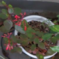 3/31 ベランダのハナミズキの新芽他