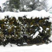 【積もった雪。】