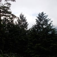 焦熱地獄の大倉尾根・萱場平で引き返す丹沢:塔ノ岳(今年23回目)