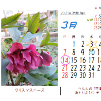 3月の花暦:2020、ブログ16年目です。