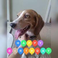 プリン11歳誕生日&うちの子記念日