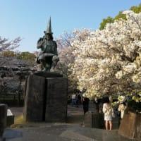 熊本城の復旧状況と桜