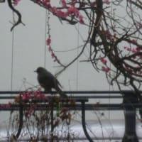 冷たい雨…老犬ラスさん少し回復かな? (*´∇`*)