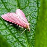 昆虫観察、名前に手間取ったホソオビアシブトクチバ、他チョウ目より