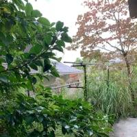 「庭をきれいにするぞ!」プロジェクト発動です