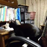 蛍光灯をつける ネコ