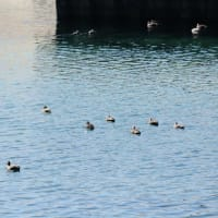 春の陽気に誘われて屋久島を半周ぶらり【屋久島風景写真:FUJIFILM X-Pro3】