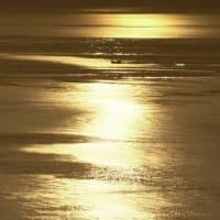 不知火海の夕景 航跡