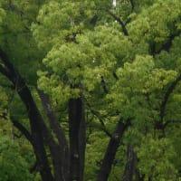 ~木々のさ・さ・や・き~