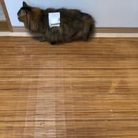 ちょっと猫のご報告。