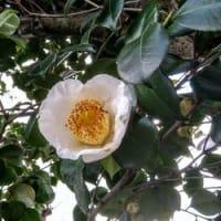 タミヨさん家から春をお届けします