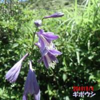 2019.8.4 やまびこ山歩会(佐賀労山) 月例山行 くじゅうの山歩き