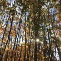 季節は秋、みなみ北海道