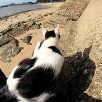 瀬戸内B島の猫たち 2019年9月 その54