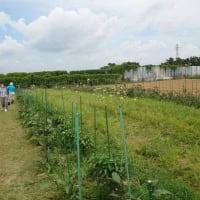 ひよせ事業所に学ぶ農との協働