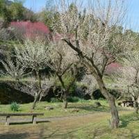 熊本市谷尾崎梅林公園