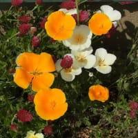 春だ、春だ! お花まつり!!