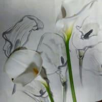 カラーの花 水墨画 墨彩画でスケッチしました