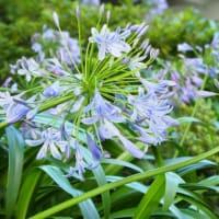 山下公園 7月のお花たち