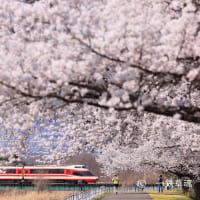 特急ゆけむり号と満開の桜