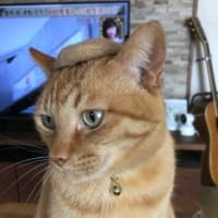 マイケル帽