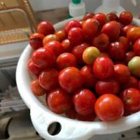 トマトジュース作り