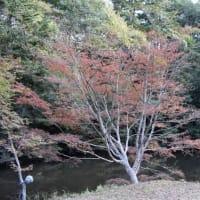 小松寺の紅葉(南房総市)
