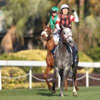 香港国際競走の登録馬