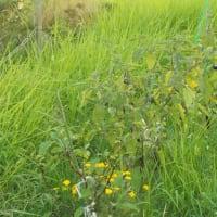草刈りビフォーアフター
