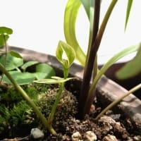 植木鉢の中のバレリーナ