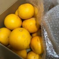 果物だもの ^^) _旦~~