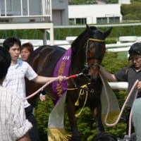 京都ジャンプS、キングジョイが重賞初制覇