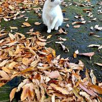 落ち葉とネコ