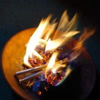 ムクゲにカブトムシが集まる送り火の日