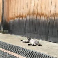 出張猫 金沢