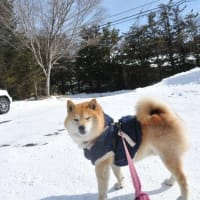 行ってきたよ☆ のりのり乗鞍♫ その1 雪だ!スキーだ!ホリデイだ!