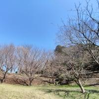 3月15日のお散歩
