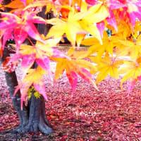 初冬の函館見晴公園②=香雪園