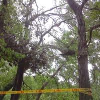 相模原公園へきのこ観察と台風被害の確認