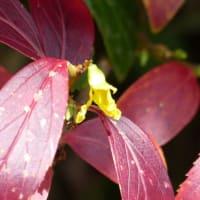 黒川の植物2