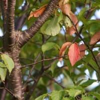 ●大乗寺丘陵公園から 秋空 キンエノコロ 彼岸花 蝶